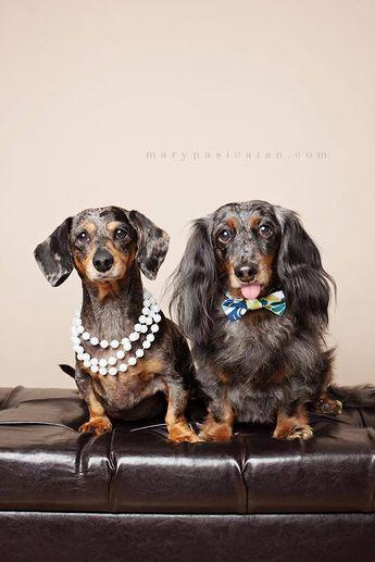 Какую собаку выбрать: Такса или Бассет хаунд? Выбор, сравнение, отзывы.